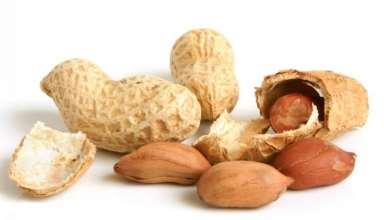 دانه های بادام زمینی